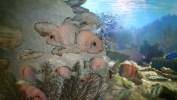 Gauthier_Underwater_Colored_withMB_WireframePassStill__00200