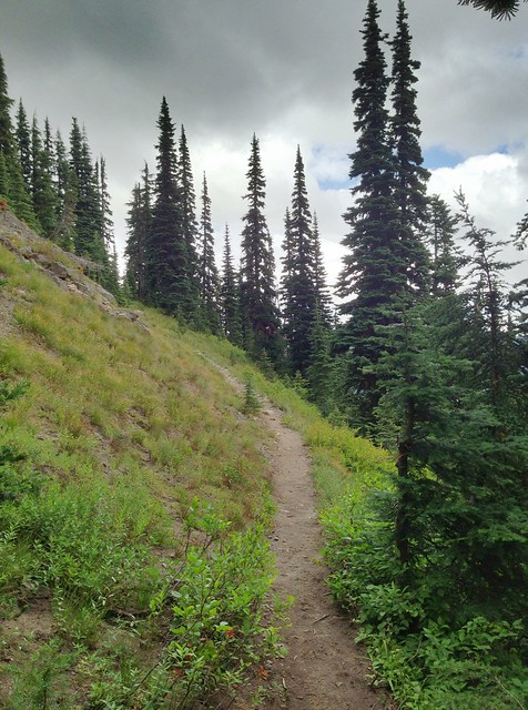Nannie Ridge Trail, Lewis County, Washington, August 2013