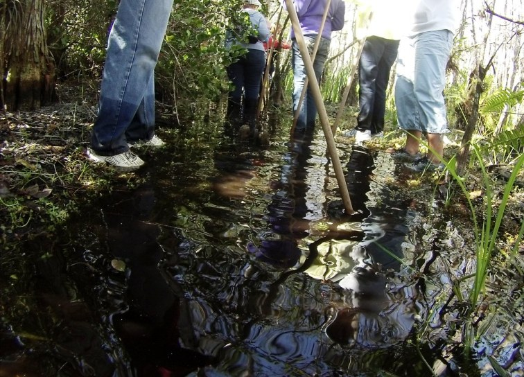 The Water Isn't So Deep During the 45-Minute Introductory Swamp Walk with Big Cypress Gallery