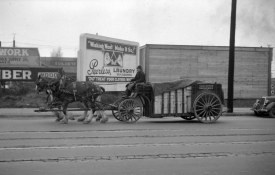 vancouver breweries horses copy