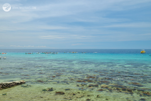 Whaleshark watching, Tan-awan, Oslob, Cebu