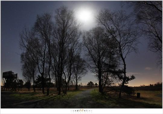 De maan is zo fel dat het schaduwen van de berken op het pad werpt.