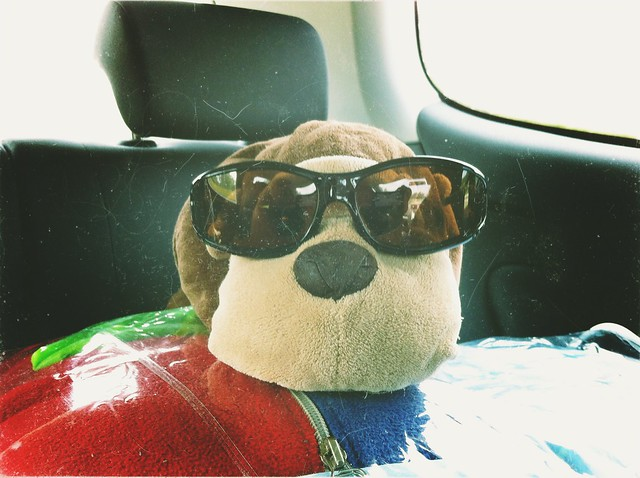 Monkey demands shades too