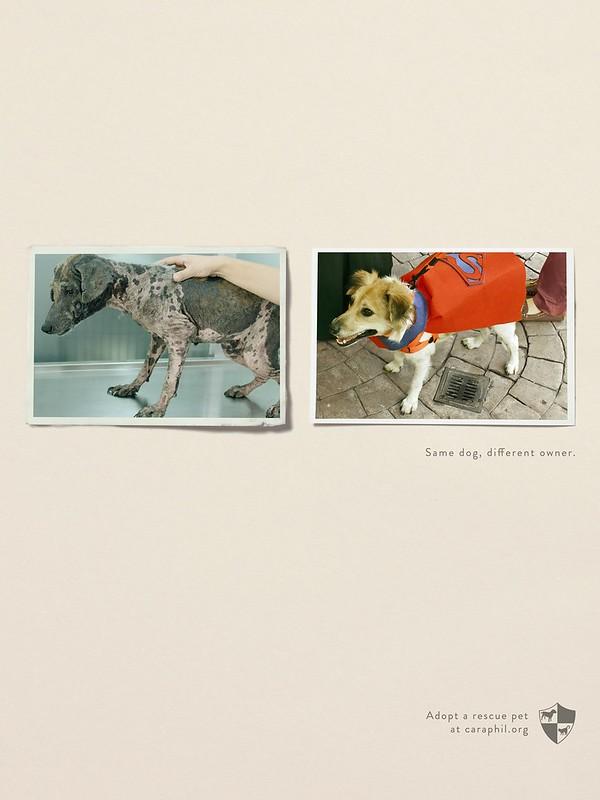Caraphil - Same Dog Different Owner1