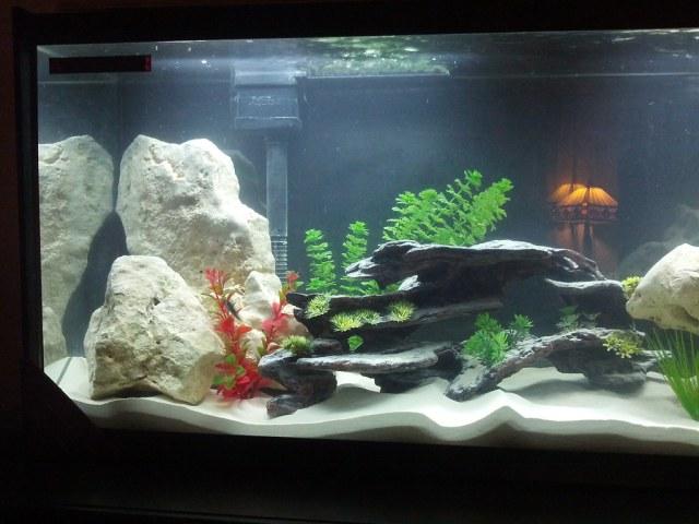 10 gallon fish tank decor fish aquariums 10 gallon for 55 gallon aquarium decoration ideas