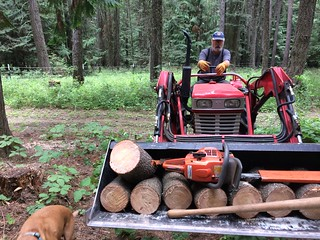 Collecting more firewood