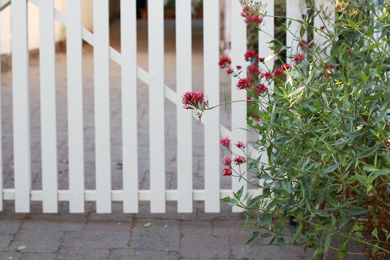 white fence red flower, mill valley