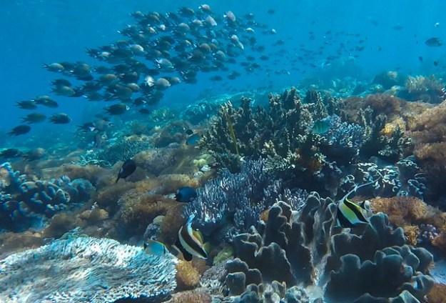 Like an aquarium. Mauan