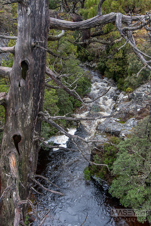 Crossing the Pencil Pine River.