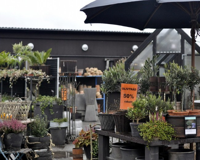handelsträdgård