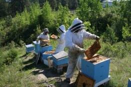 Tantalus Vineyards hives