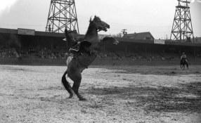 Rodeo at Callister Park Stadium