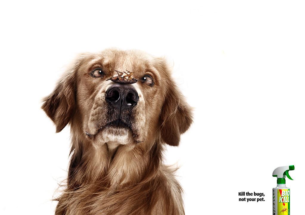 Bio Kill - Dog 2