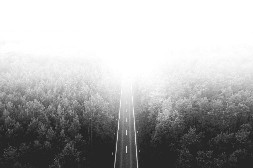Imagen gratis de una carretera por el bosque