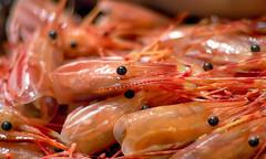 shrimp-heads-dau-tom