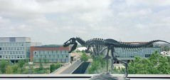 3D Printed T-Rex