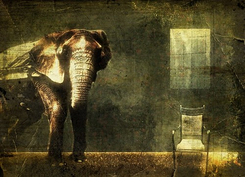 7890787158 c43d94f02b The Elephant In The Room