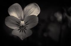 Fleurs des champs - 05