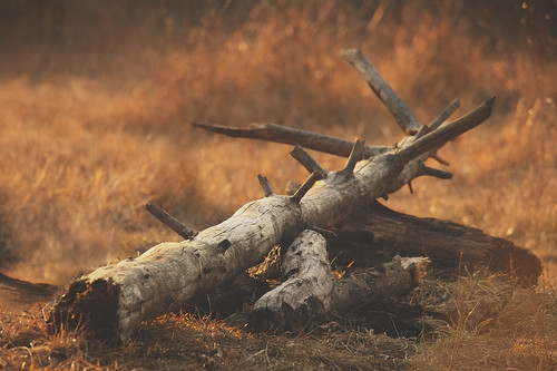 """dead tree in the warm light • <a style=""""font-size:0.8em;"""" href=""""http://www.flickr.com/photos/22289452@N07/15983603233/"""" target=""""_blank"""">View on Flickr</a>"""
