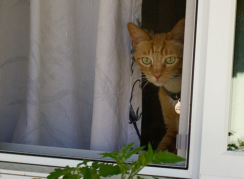 Feline Friday: Watching