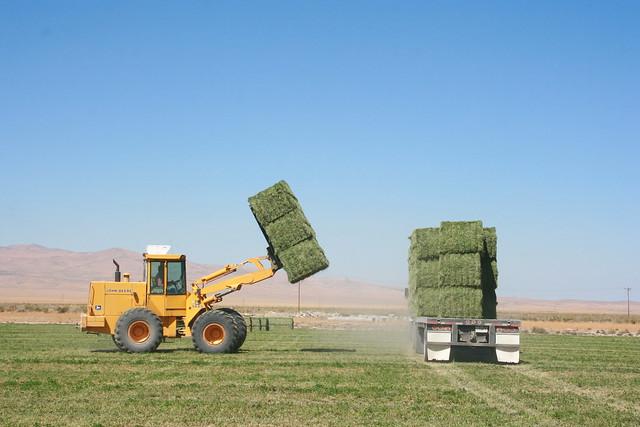 hay hauling