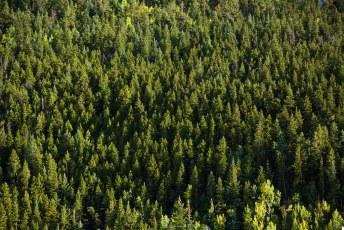 Endless Pines Rocky Mountain National Park Colorado