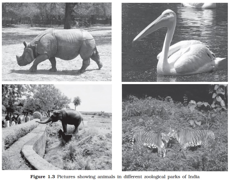 NCERT Class XI Biology: Chapter 1   The Living World Image by AglaSem
