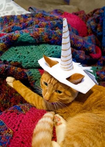 Working on the cat unicorn hat