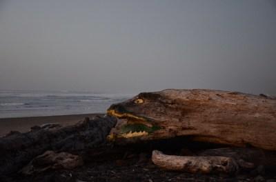 俄勒冈海岸的海蛇