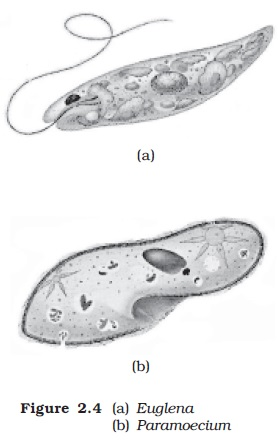 NCERT Class XI Biology: Chapter 2   Biological Classification Image by AglaSem