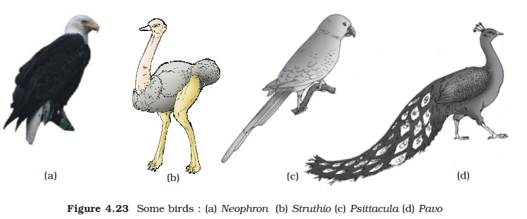 NCERT Class XI Biology: Chapter 4   Animal Kingdom