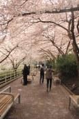 Burrard Station Blossoms