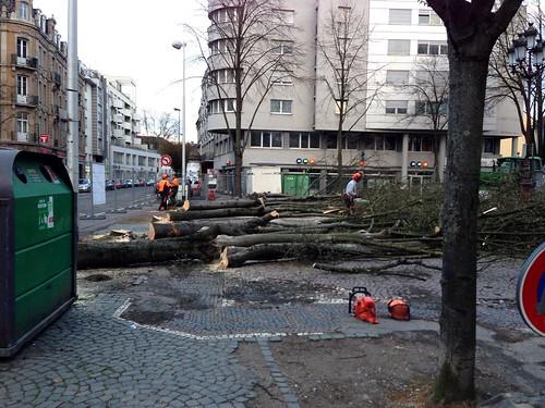 Place du massacre des arbres par Jean Rottner à Mulhouse