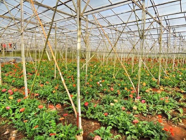 Dalat Flower Farm