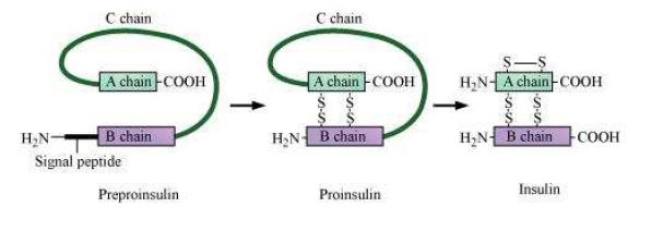NCERT Solutions Class 12th Biology: Chapter 12 – Biotechnology and its Applications