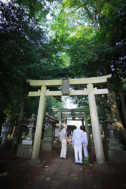 #18 The Giant Zelkova of Fujioka Shrine