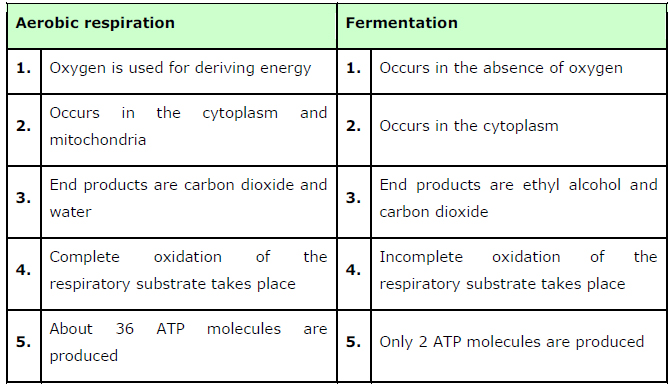 NCERT Solutions Class 11th Biology: Chapter 14 Respiration in Plants Image by AglaSem