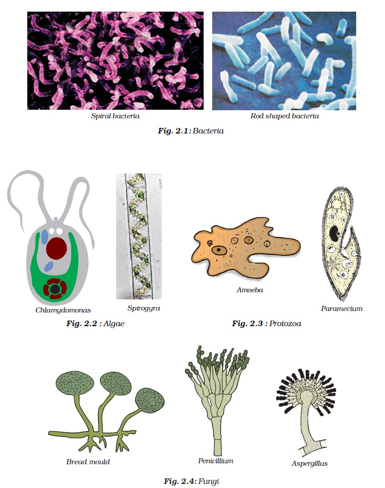 NCERT Class VIII Science Chapter 2 Microorganisms   Friend and Foe  Image by AglaSem