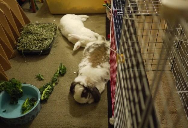 bunnies lounging