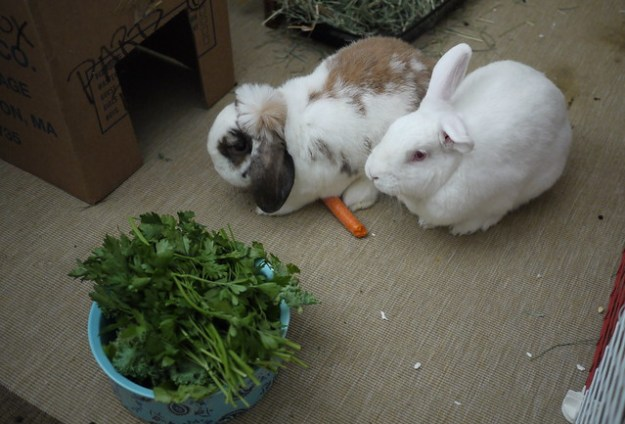 gus and betsy sharing a carrot