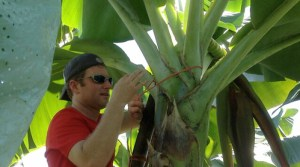 Working as a banana worker in Costa Rica