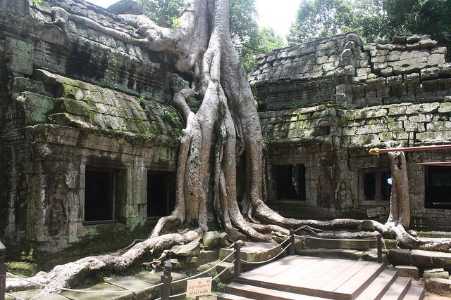 The Best of Angkor Wat: Ta Prohm
