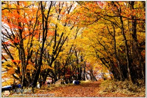 [日本關東楓紅之旅3-5]日光:中禪寺湖畔散策