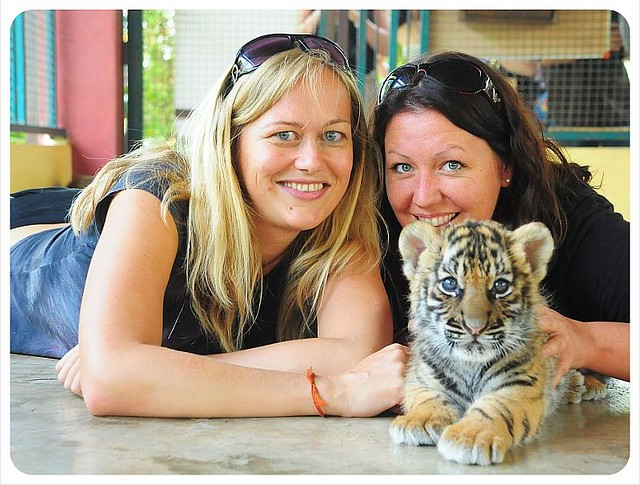 Globetrotter Girls Playing with a baby tiger in northern thailand