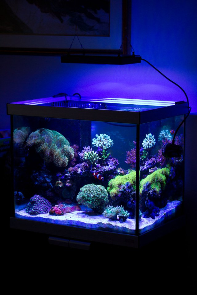 CDN 33gal fluval studio   Members Aquariums   Nano Reef.com Forums