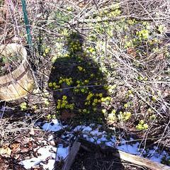 And it's Spring again! Gotta love Michigan!