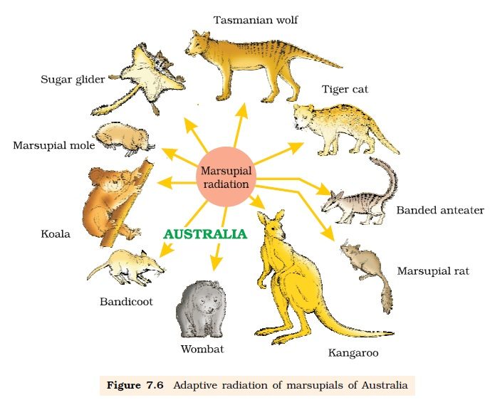 NCERT Class XII Biology Chapter 7 : Evolution