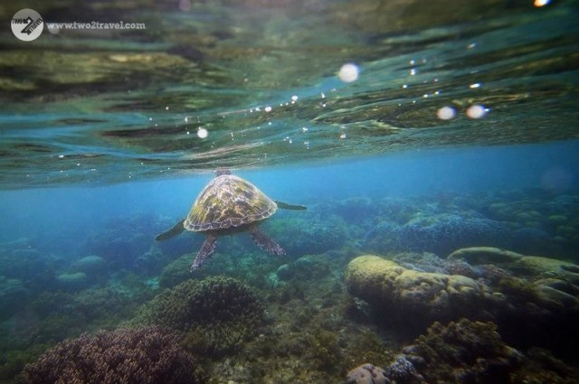 TWO2TRAVEL | Apo Island | Underwater