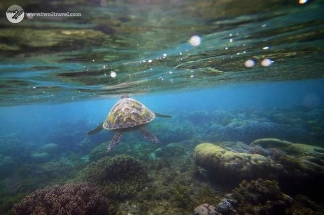 TWO2TRAVEL | Apo Island | Underwater