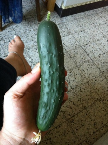 First balcony cucumber -- tasty!